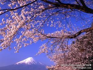 spring1_1024